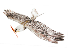 Free Shipping RC Plane EPP Airplane Mini  Eagle Wingspan 1200mm Slow Flyer Model