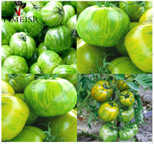 Tomato Seeds Edible Fruits Vegetable Seed,Flower Skin Ball Tomato Plant Rare Green-Yellow Stripes Sweet tomatoes Seeds 50pcs/bag(China)