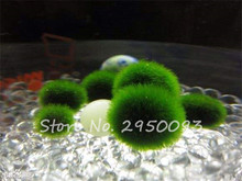 Imported 200pcs/bag Moss Ball Seeds Aquarium Decoration Fish Tank Underwater Ornament Landscape Water Grass Home Garden Plant