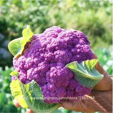5 Colors purple broccoli Cauliflower seeds, high-quality organic vegetable seeds - 100 Seed particles Free shipping(China)