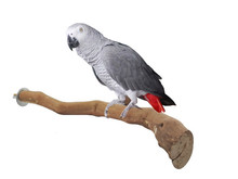 Pet birds Large parrot grape branch standing pole bird toy(China)