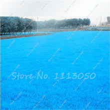 Hot Sale !!! 500 Pcs Rare Blue Grass Seed, Lawn Seed, Perennial Flowers Garden,Outdoor Plant Seed Germination Rate of 100%(China)