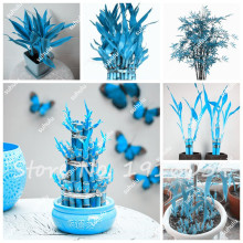 New Seeds 2017! 10Pcs Blue Lucky Bamboo Choose Potted Seeds Variety Complete Dracaena Seeds the Budding Rate 95%, Easy to Grow(China)