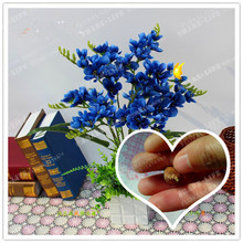 Blue Freesia Hybrida Bulbs Potted Flowers Potted Plant Roots (It Is Not Seed) -Flower Bulbs,Indoor Plant,Natural Growth 2pcs