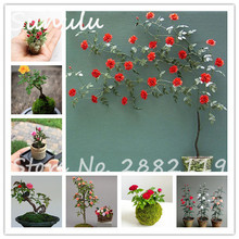 100 mini rare rainbow rose tree seed beautiful perennial climbing rose flower attractive butterfly light up your garden mixed