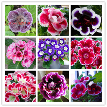 200 pcs rare real flowers gloxinia seeds, sinningia gloxinia flower seed for home DIY  Garden ornamental-plant FREE shipping