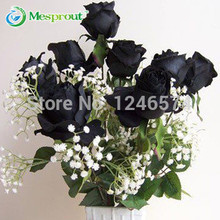 Rose seeds black rose seeds rare Amazingly Beautiful Black Rose Flower - 100 pcs seeds(China)