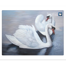 Animal white swan, lake, picture of rhinestones, diamond embroidery swan, kits-for-embroidery, embroidery-beads,  cross stitch