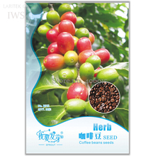 Heirloom Colorful Coffee Bean Seeds, Original Pack, 10 seeds, high medicinal value  IWSB112