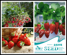 strawberry Seeds sweet big Potted strawberries fresh fruit seeds Garden plant Original Professional Packing 50 particles Seed(China)