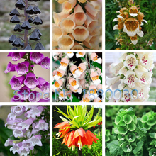 Rare 24 different color styles Fritillaria foxglove Digitalis potted bonsai garden seeds DIY home garden 100PCS(China)
