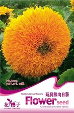 (Mix minimum order $5)1 original pack 15 pcs seeds teddy bear sunflower seeds balcony potted plants  Free Shipping