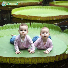 Hydroponic Flowers Small Victoria amazonica Seeds Mini Lotus Seeds Bonsai Seeds Set Hydrophyte - 10 pcs Seeds(China)