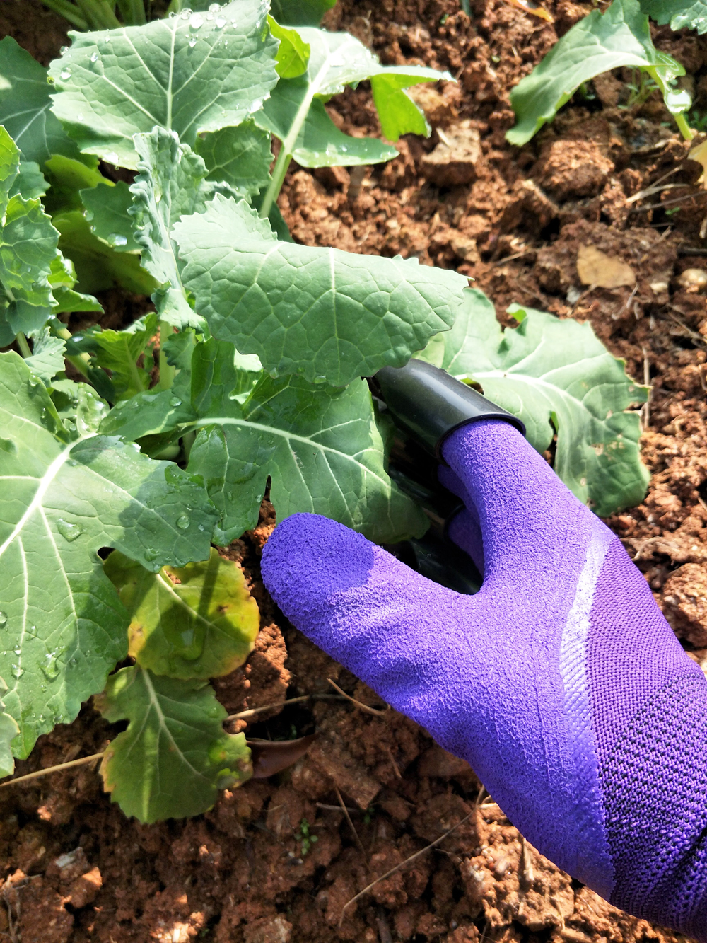 Protective Gears Garden Gloves 4 Hand Claw Abs Plastic Rubber Gloves Quick Excavation Plant Waterproof Insulation Home Living Essential Gadgets Reputation First Tools