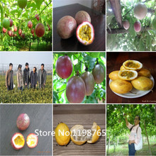2016 Hot 100Pcs Exotic Passion Fruit Seeds Purple Passiflora edulis Passion Flower seeds Outdoor plant