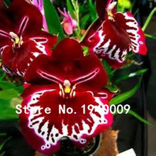 New Arrival!!! 50 pcs/bag 25 kinds Beautiful Viola Tricolor Seed Pansy Flower Seed Bonsai pot plant Seedling Free shipping