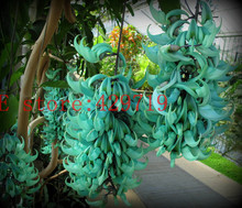 20 pcs Endangered Jade Vine 'Strongylodon Macrobotrys' Flower Seeds blue wisteria  flowers tree seed for garden planting