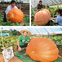 Specials! 30pcs / Pack, Super Large Chinese Vegetable Seeds Pumpkin Seeds, Rare Species