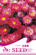 1 original pack 50 pcs China aster seeds Bonsai chrysanthemum flower seeds,Bonsai balcony flower seeds free shipping