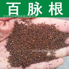 Lotus root seed forage seeds authentic five-leaf clover grass horn bird-foot bean flower gold flower seeds 200g / Pack