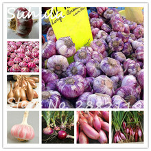 Garlic Seeds 50 Particles Red And Healthy Bonsai Seeds Diy Plant Rare Onion Garlics Vegetable Seeds Diy Home Garden Plants(China)