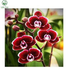 diy diamond embroidery red orchid floral full scale crystal art cross stitch needlework 5d diamond painting mosaic wall sticker