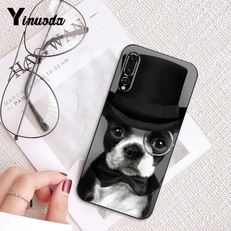 funny animal puppy lovely bulldog