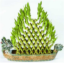 50 pcs DIY a Bamboo House Good Luck Bamboo Seeds Dracaena Seeds Potted Absorb Dust Tree Seeds Anti Radiation