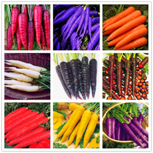 500 pcs/bag Five inches ginseng carrot seeds potted fruit ,Organic healthy seeds vegetables, outdoor plant for home garden(China)