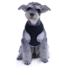 New Fashion Dog Harness Animal Product Adjustable For Puppy Comfort Harness Top Quality 5 Sizes Ainmal Product Wholesale(China)