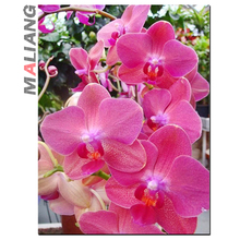 Needlework 5D Diamond Painting Cross Stitch Crystal Red Orchid Flower Diamond Embroidery Mosaic Decorative Painting wholesale
