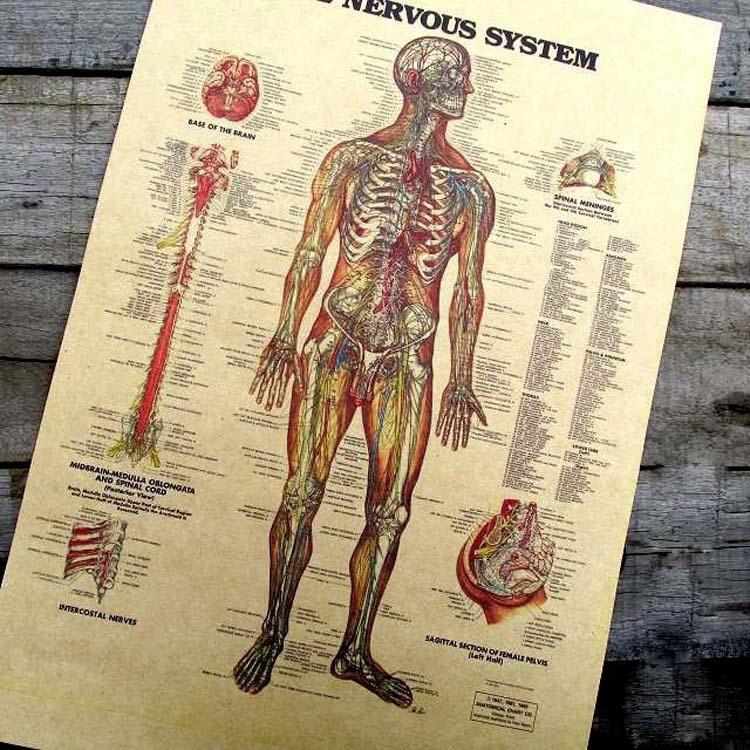 Vintage anatomy posters