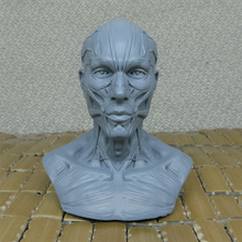Art of human musculoskeletal head carving,Art Bust Painting Reference,Skull bust model