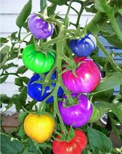 100pcs/bag rainbow tomato seeds, bonsai organic vegetable & fruit seeds,potted plant for home &garden