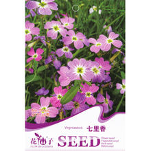 Virginia Stock (Mixed) Seed * 1 Packet 50 Seeds * Matthiola Bicornis * Hardy Flower * Wonderful Fragrance(China)