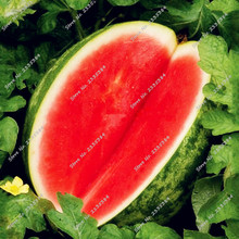Melon Seeds Seedless Watermelon Seeds Fruit Plant Variety Fresh Cool Summer Bonsai Plant for Home Garden as Best Gift 30pcs