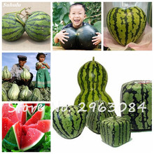20 Pcs Sweet Deformity Watermelon Seed Red Yellow Meat Fruit Seed Fresh Water Melon Balcony Bonsai Planting Flower Pots Planters(China)