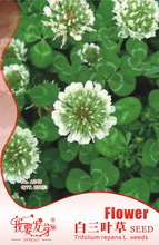 Original Pack 250 Seeds / Pack,Clover seed,white Dutch clover clover seed,clover plants,beautiful grass seeds