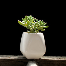 Fleshy succulents pots ceramic pots fleshy plant small flower pots zakka Home Decor Gift