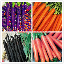 500pcs/bag Sweet Carrot seeds,9 colours,Vegetable Seeds Organic Russian Heirloom ,budding rate 98%,plant for home & garden(China)
