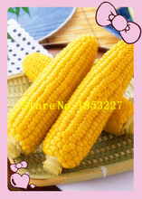 GGG 10 Maize pineapple fruit seeds raw corn Best Indoor or Patio Plant Easy to take care(China)
