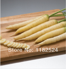 Super-affordable! Crisp, sweet flavor Pure white roots - White Satin (F1) (OG) Carrots Seeds vegetables seeds ~ 500 SEEDS