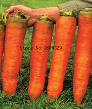 Radish Seeds Carrots Krasnyy Velikan - Red Giant Organic Russian Heirloom Vegetable AA 50pcs(China)
