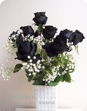 200 PCS Rare Black Rose Flowers Rare Amazingly Beautiful Black Rose Seeds a Popular Garden bonsai Flower