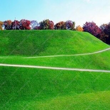 200pcs Lawn Turf Seed Grass Seeds Fresh Green Soft Runner Turfgrass For Home Park Soccer Golf Place Free Shipping