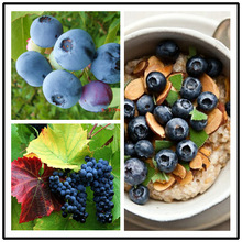 30pcs/ pack Sweet BlueBerry seeds Vegetables and fruit seeds DIY HOME GARDEN Free Shipping(China)