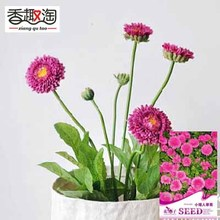 1 Original Pack 50pcs China aster seeds, home Indoor Plants bonsai flowers seeds