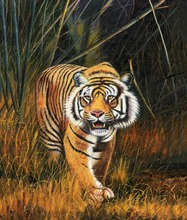 DH Art Frameless High Quality Canvas Printings Lifelike Tiger Oil Painting Cuadros Decoracion Pastoral Style Wall Pictures