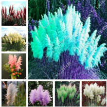 400 pcs beautiful purple flower seed Rare Pampas grass garden plant flower seeds flowers home and garden Free Shipping(China)