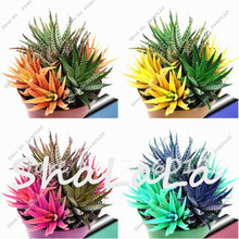 New! 20 seeds Colorful Cactus Rebutia Variety Mix Exotic Flowering Cacti Rare Cactus Aloe Seed Office Mini Plant Succulent Seed